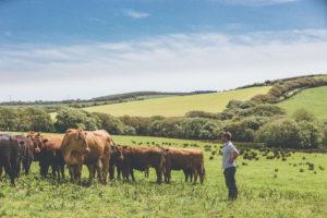 The working farm at Nancarrow near Truro, Cornwall. Ross Talling