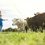 Boy pointing at cows