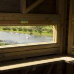 Swan through the window of the bird hide