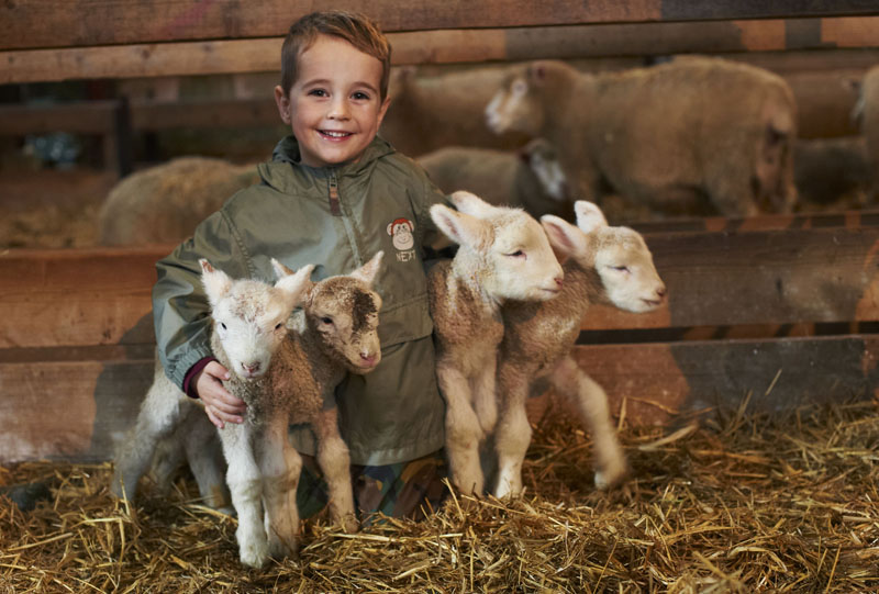 Experience spring lambing on Cornish farmstay