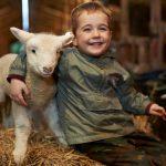 Lambing 6
