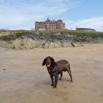 Dog-in-front-of-Headland