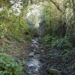 Explore the grounds of Trefresa Farm at Porthilly Spirit