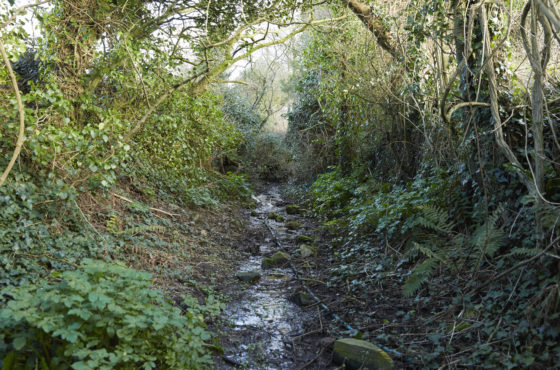 Explore the grounds of Trefresa Farm at Porthilly Spirit Lulu Ash