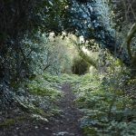 Explore magical woodlands at Porthilly Spirit