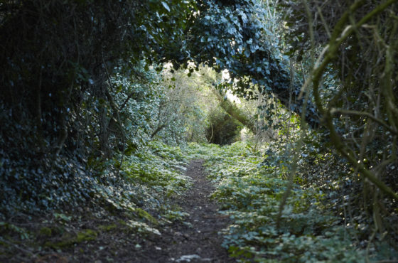 Explore magical woodlands at Porthilly Spirit Lulu Ash