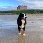 Dog-friendly breaks at The Headland Hotel