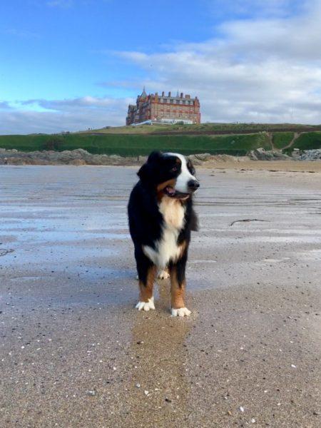 Dog-friendly breaks at The Headland Hotel The Headland Hotel