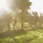 Sun shining over Trefresa Farm, the venue for Porthilly Spirit