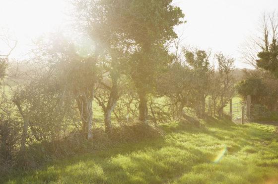 Sun shining over Trefresa Farm, the venue for Porthilly Spirit Lulu Ash