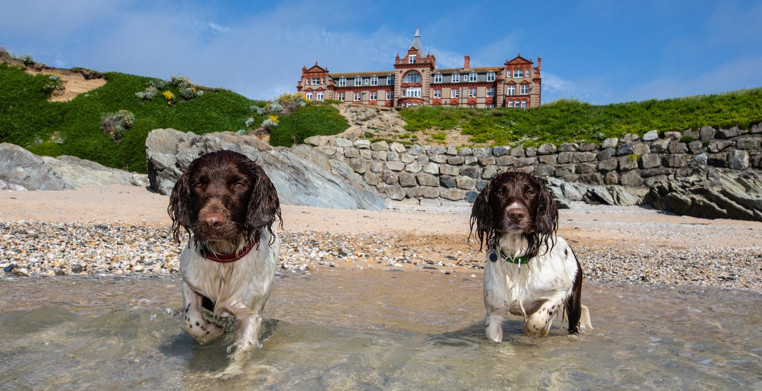 Celebrity spaniels raise funds for the Cornwall Community Foundation