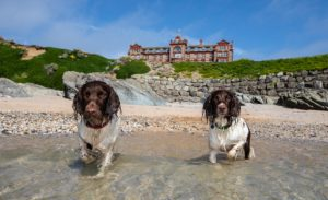 Max, Paddy and Harry during their stay at The Headland Hotel Kerry Irving