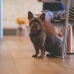Dogs are welcome at Una Kitchen