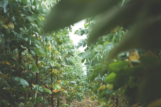 Eucalyptus saplings at Wildwood. James Ram