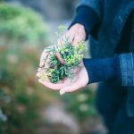 pentire-plant-blend-2