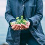 pentire-plant-blend-3