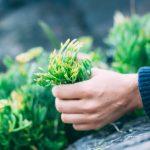 pentire-plant-blend-4