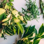 pentire-plant-blend-6