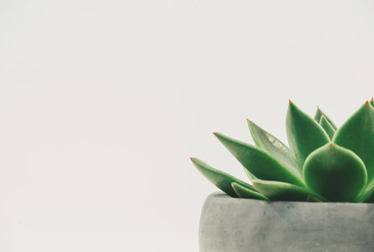 plant-close-up